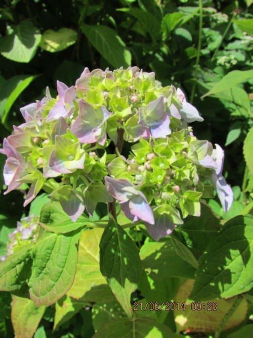 Nyd de mange blomster i haven
