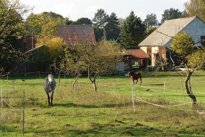 Großer Garten hinter dem Hof