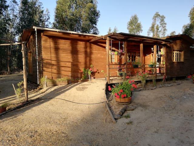 Acogedora cabaña en bosque de eucaliptus
