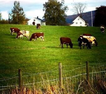Eide gård i Eidsbygda. Gårdsbruk med kyr.