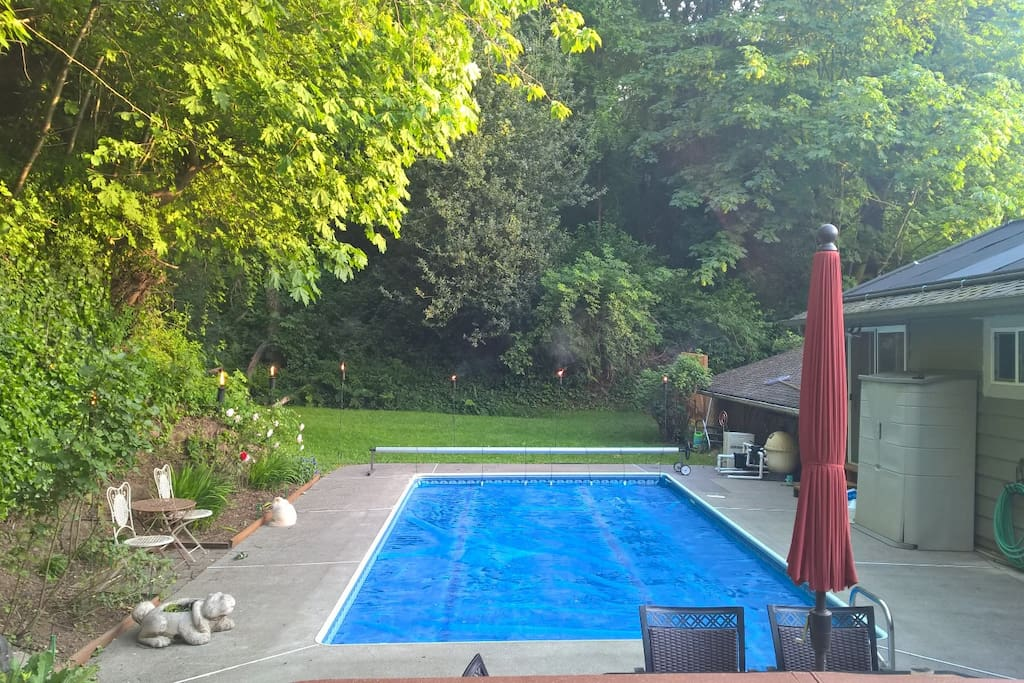 Private back yard with swimming pool