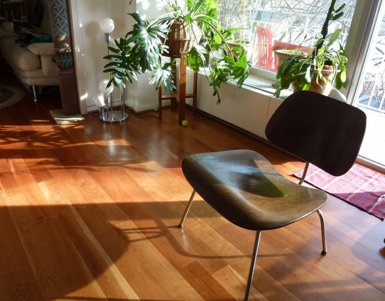Great hardwood floors and lots of sunlight and greenery.