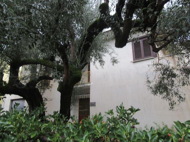 """Casa vacanza """"Villa degli ulivi"""" - 6 posti letto - Marina di Ascea - Talo"""