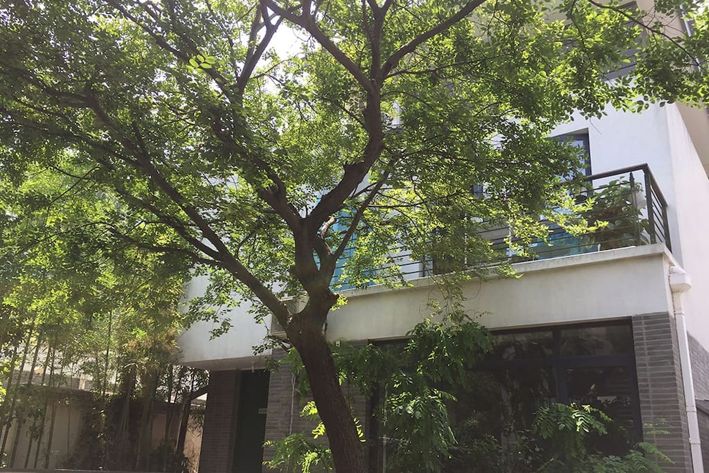 The house around by trees