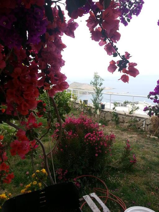 seawiev frpm garden terrace