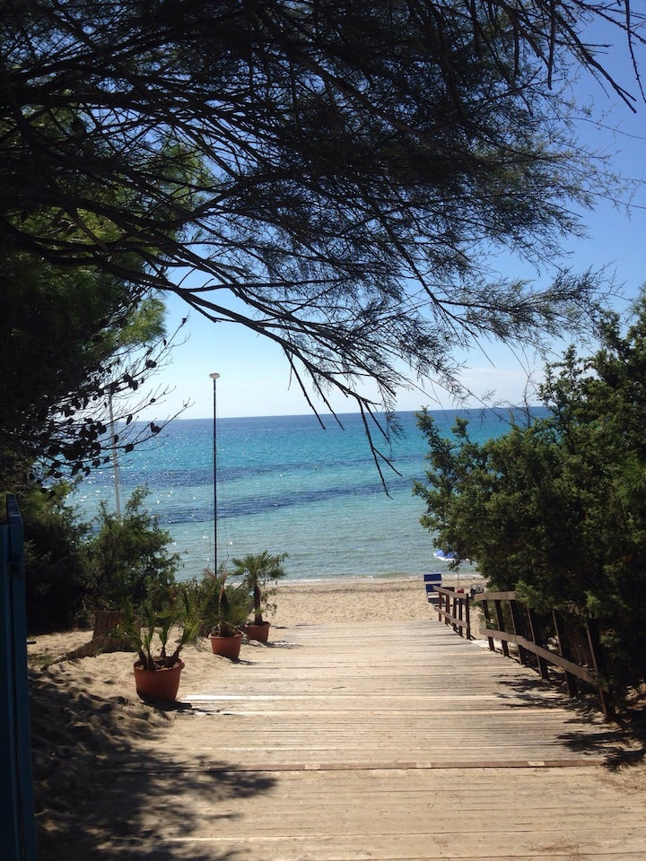 Under the pines near the sea