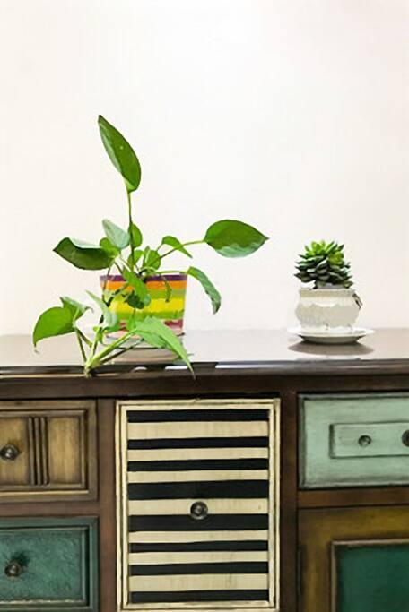 漂亮的盆栽,让房间生机盎然