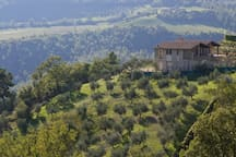 the house on the top of a olive grove hill