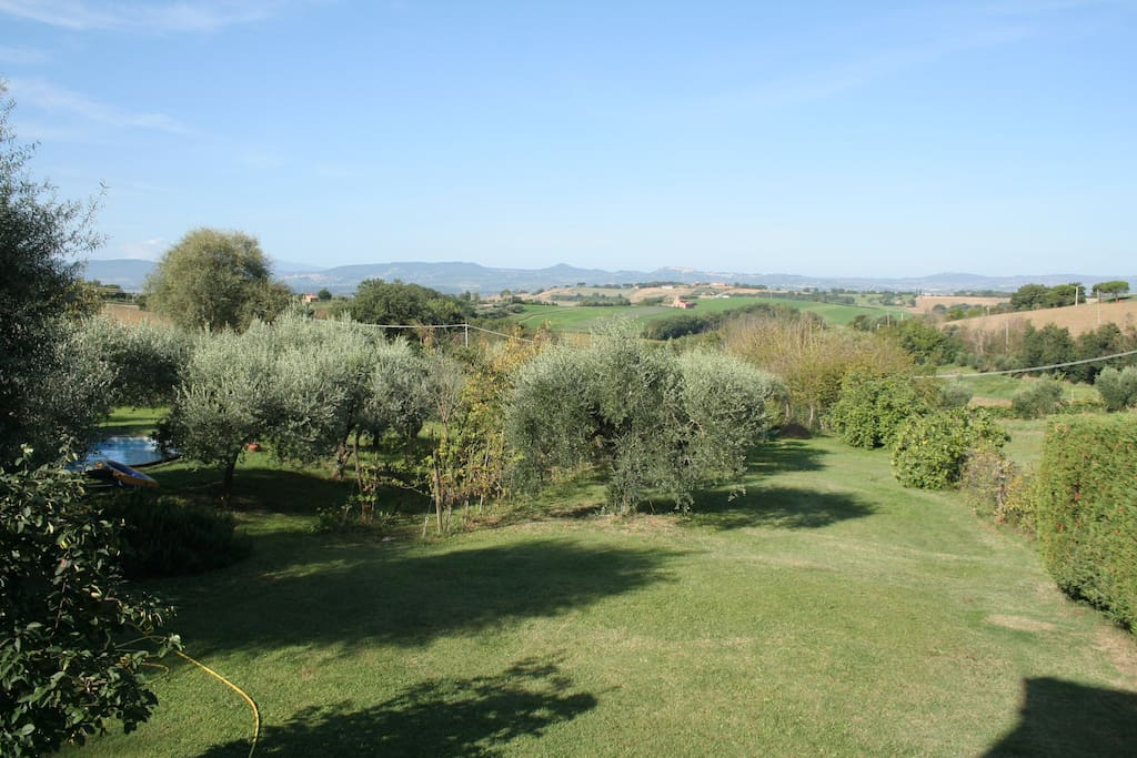 The olive tree garden