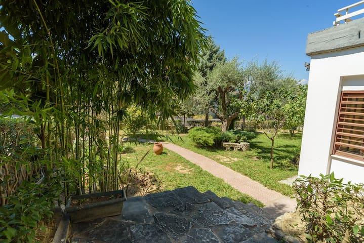 An Edens Garden Near The Sea   Pansion Youli