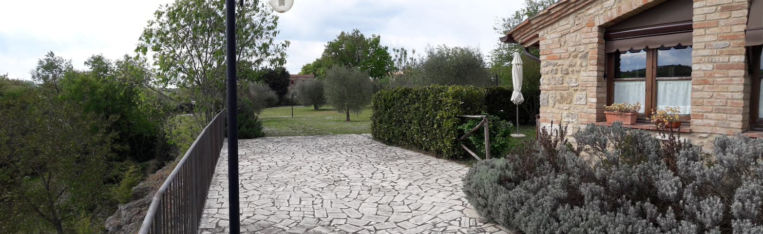 A view of the common garden with olive trees