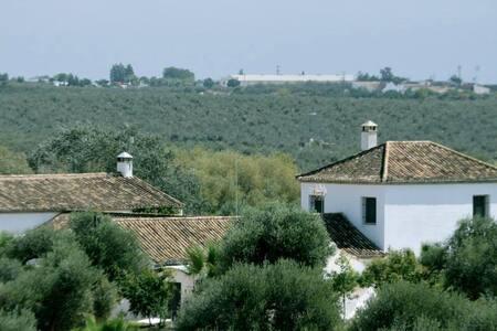 El Cotillo de San José - Hinojos
