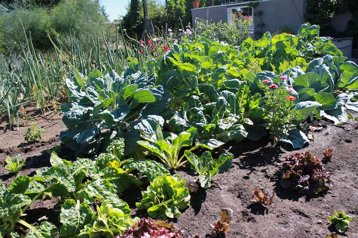 Brussel Sprouts, Lettuce, Chard, Beets, Basil.... oh my!