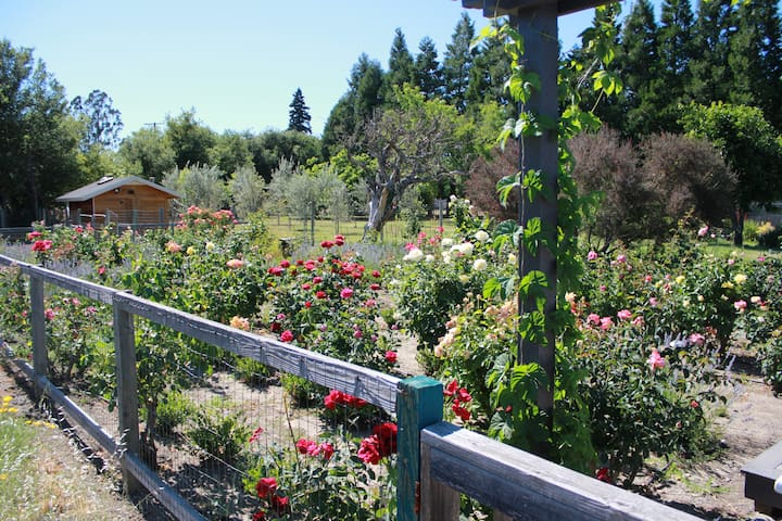The rose garden is in bloom all summer.  There is a patio for you to enjoy the flowers during your stay.