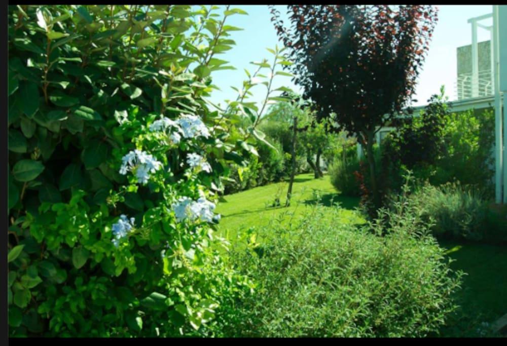 Giardino con essenze mediterranee