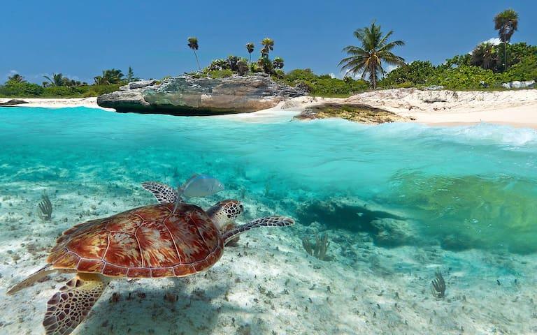 """""""Diegos, Cancun Beach Villa"""" *****5 Star!"""