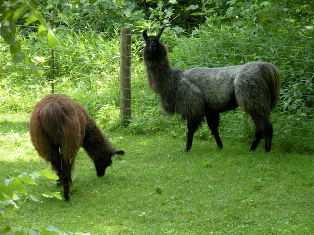 Wildwood Inn and Llama Farm 1