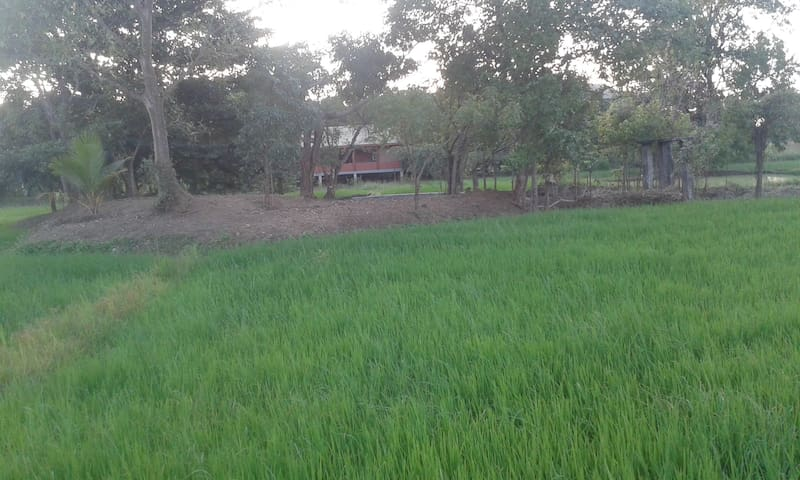 Dambulu Oya Eco Estate  Sri Lanka