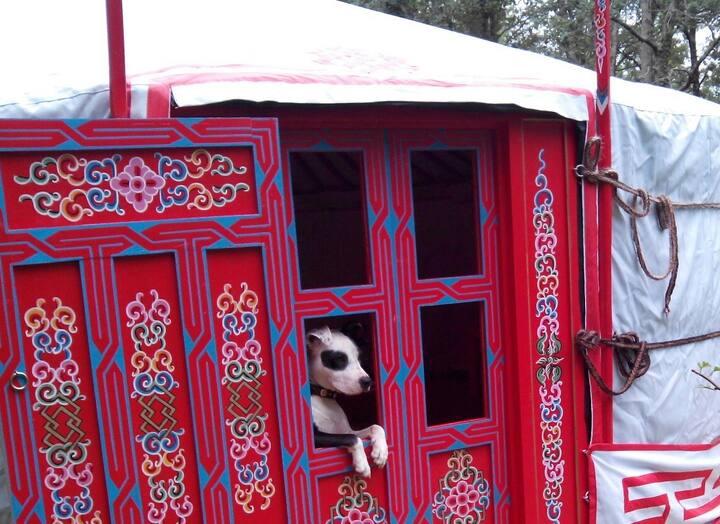 Bijzonder slapen in een echte Mongoolse 3p. Yurt