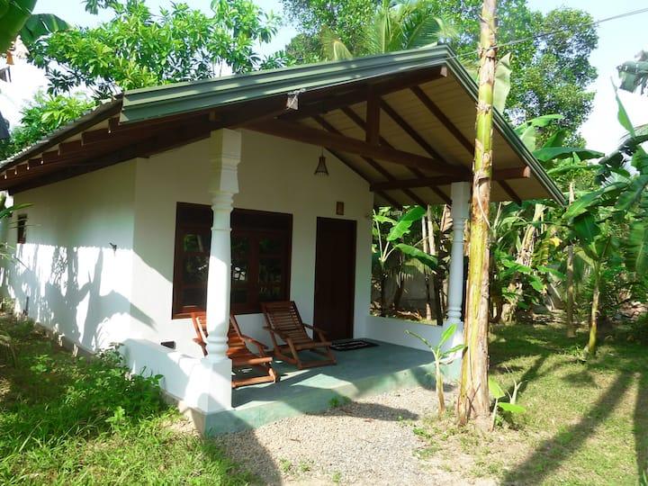 Chill and Surf Sri Lanka- Time Lag Garden