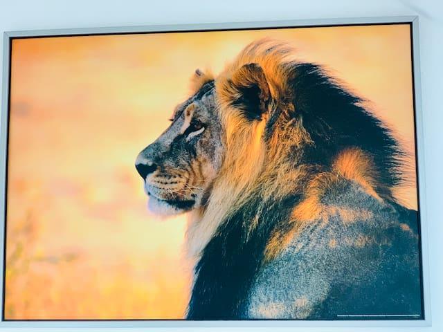 Löwenstarker Aufenthalt im Leipziger Zentrum -Lift