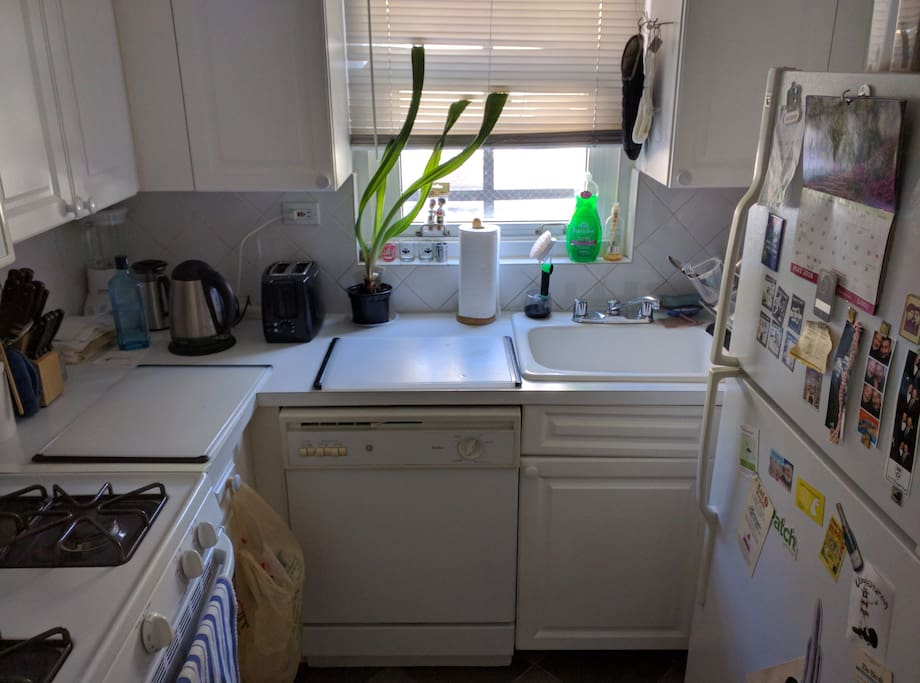 The galley kitchen has full size fridge and stove and a microwave oven. And a plant that will not die. No, seriously.