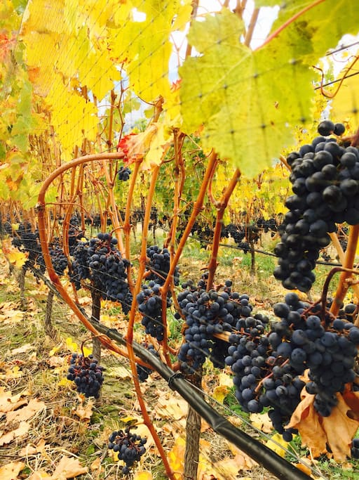 Vineyards all around