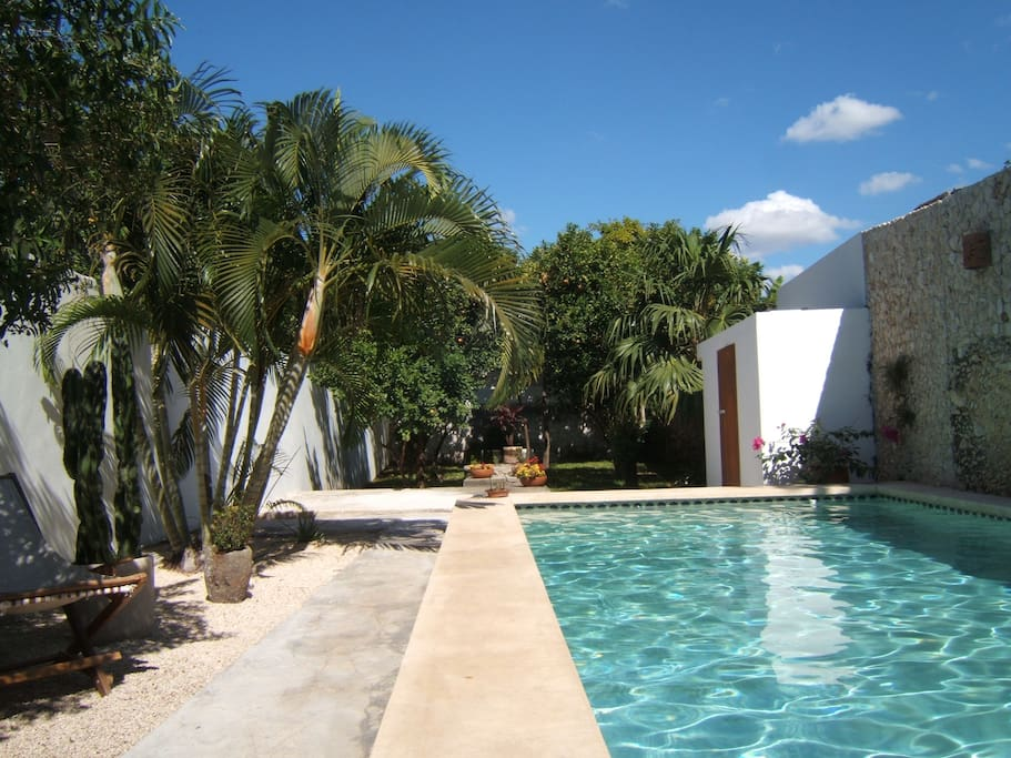 Piscine et terrain / pool and backyard