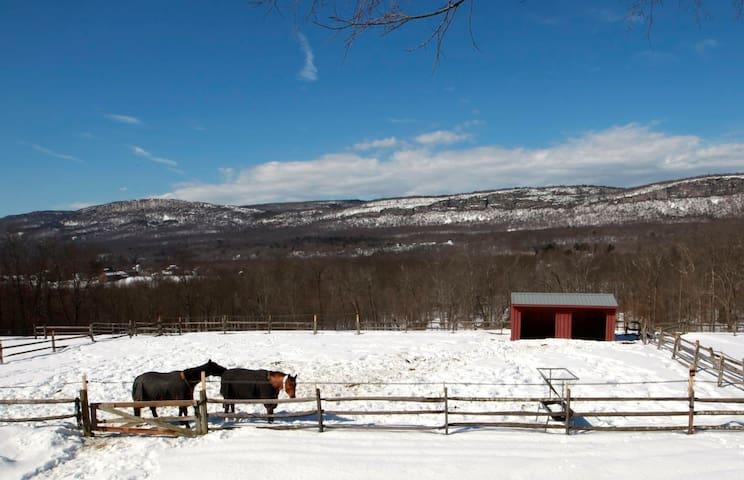 ...on a 120-acre horse farm.