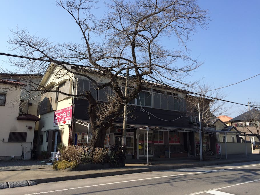 It's a big Japanese house right next to a great Sakura tree street.