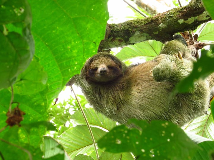 One of the beautiful sloths.