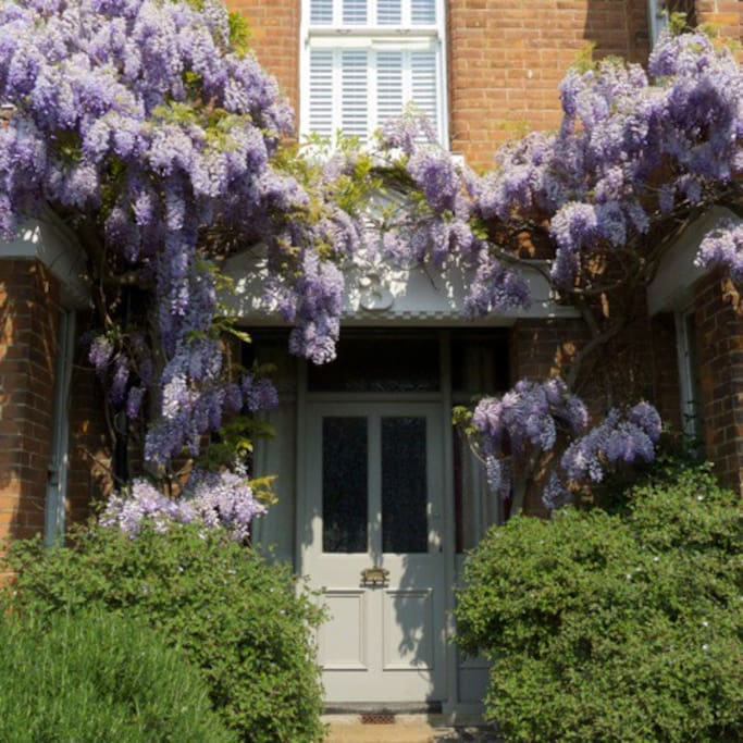 entrance in Spring with Wisteria in bloom.