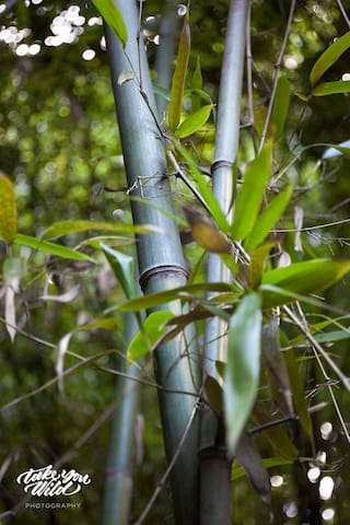 Lindsay Appel's shot of our magical bamboo forest. Everyone says they feel like they someplace exotic and tropical.