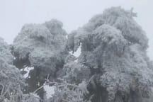 南岳衡山半山龙景山庄/日出/避暑/请香(包正餐)/免费停车
