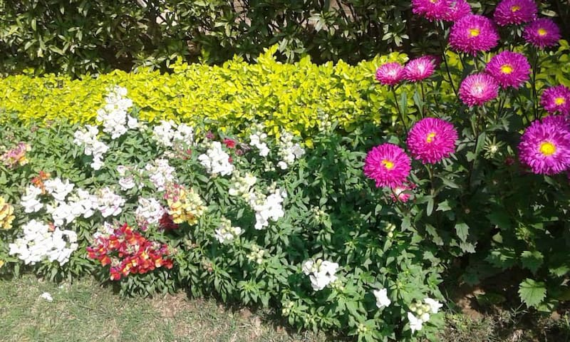 Flowers of all colours in the garden