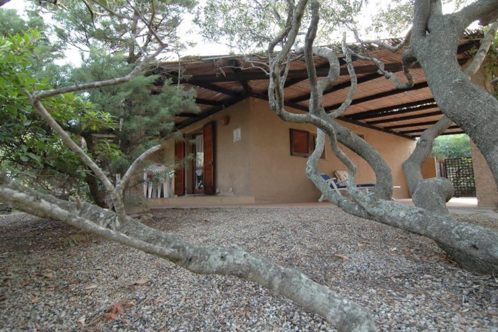 Il patio dove passare le fresche serata estive e i caldi pomeriggi all'ombra degli ulivi