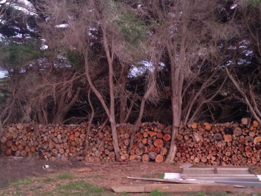 Our wall of wood from fallen limbs, creating a fence