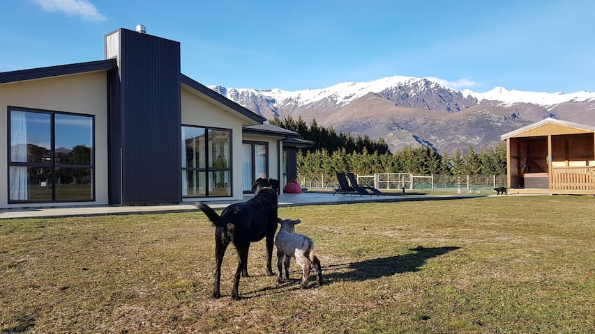 Country Lifestyle near Arrowtown- Solo traveller