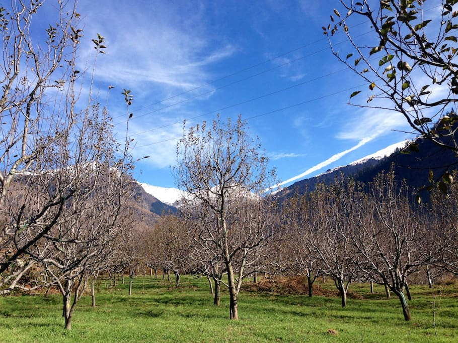 Apple orchard behind the house. Perfect place to have red wine in the sun.