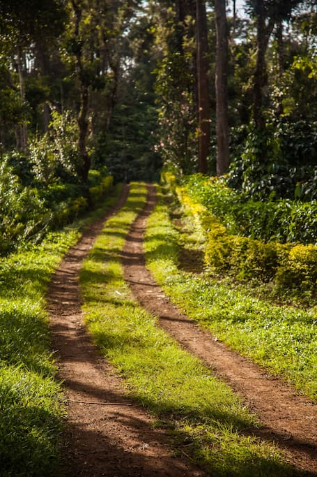 ..is a Road Less Travelled..