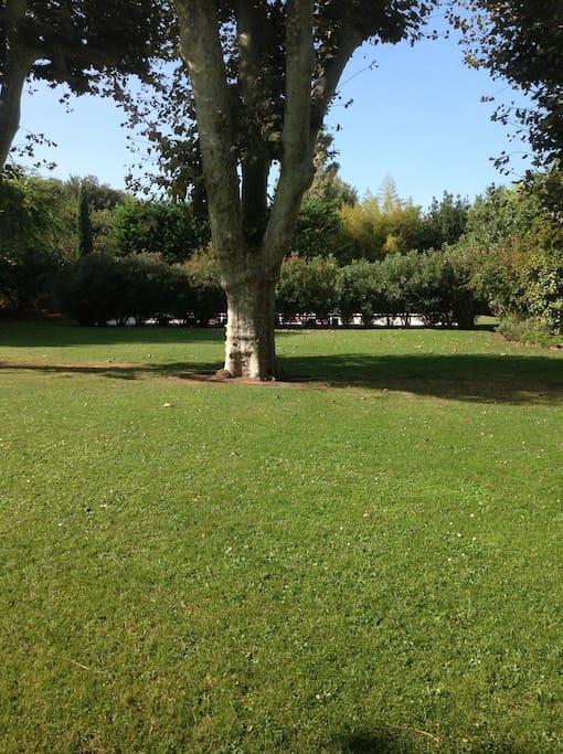 un très grand jardin, et l'ombre des 4 gros platanes