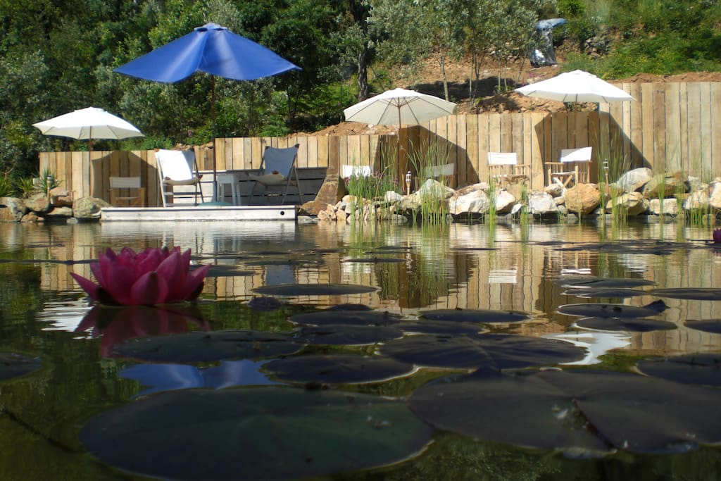 Our eco-pool, totally without chemicals and surrounded by beautiful water plants