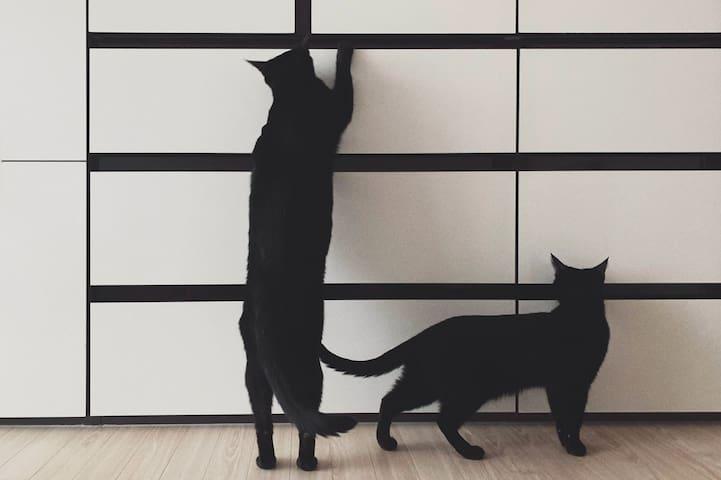 목포 최고의 노을이 보이는 곳에서 고양이부부 그리고 빈티지 찻잔으로 즐기는 티타임