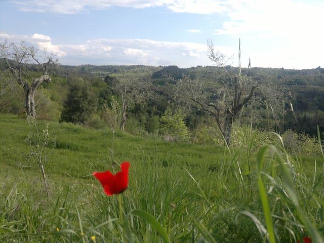 Our beautiful surroundings