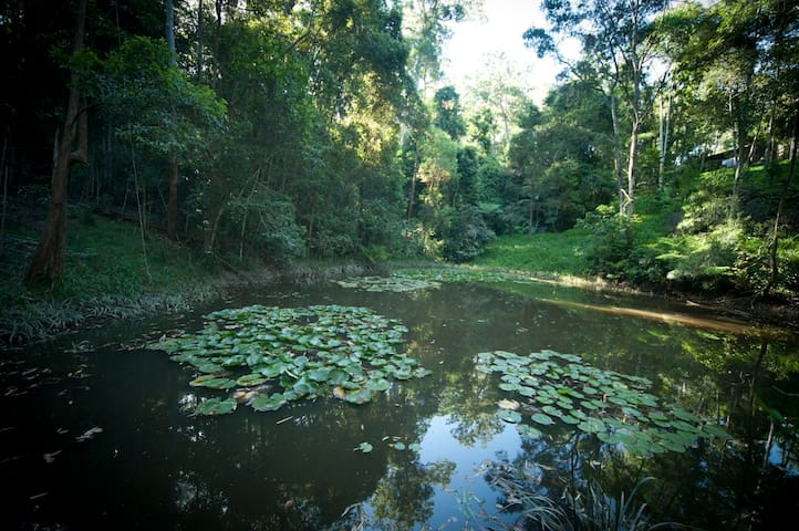 CRITTERS - quiet self contained rainforest studio - Gleniffer - Bed & Breakfast