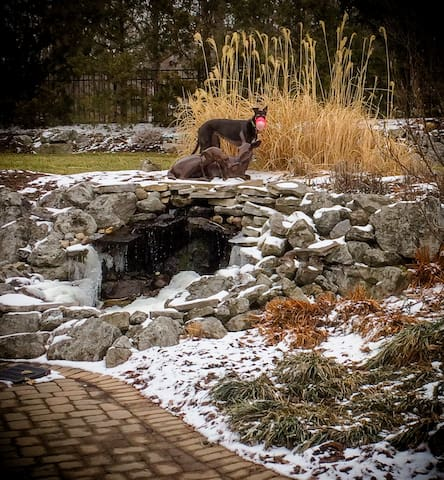 Our greyhound Zelda in our slightly snowy back yard.