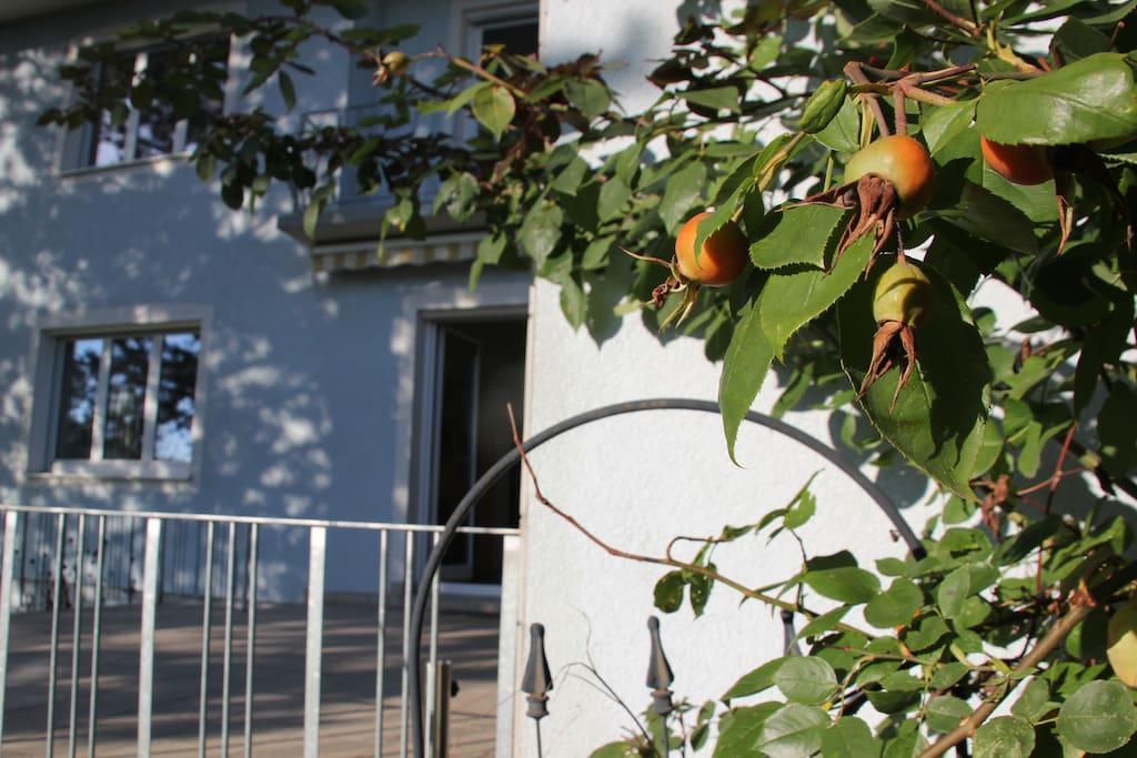Zur FEWO gehörige Terrasse.