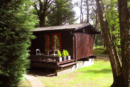 70s style pine cabin in West Wales - Cenarth
