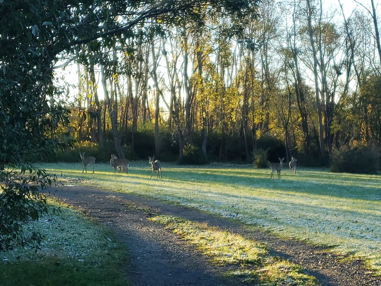 Early morning deer grazing as you leave the property