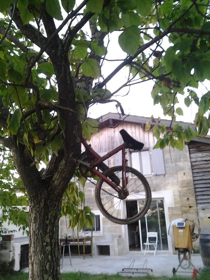 Au vélo  dans l'arbre